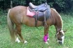 hippoterapia e petterapia (139)